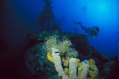 I 169 submarine by Google shipwreck database