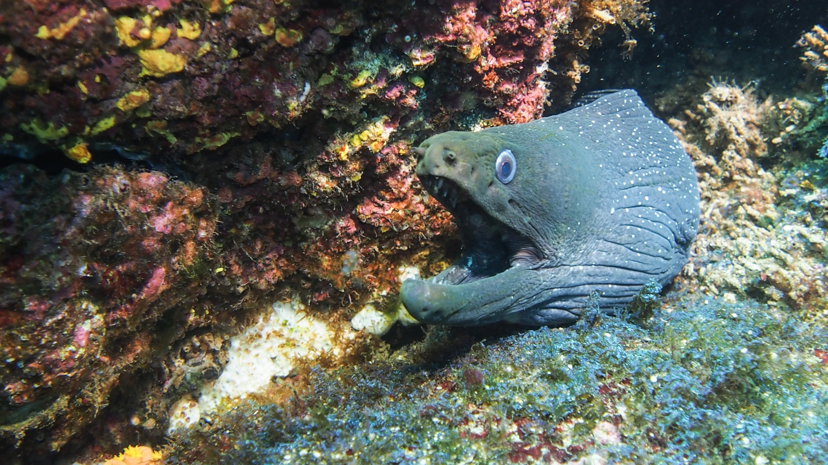 Moray eels by Nicole Hemsley