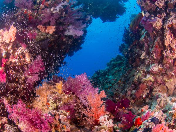Red Sea Egypt Daedalus