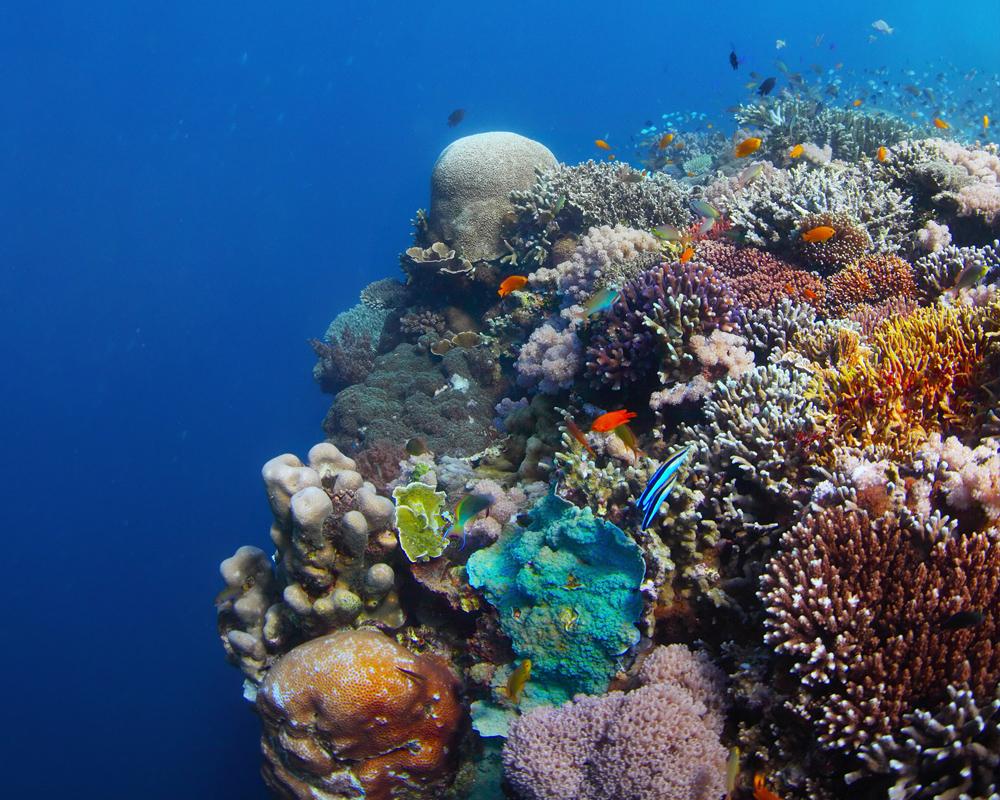 Central Atolls Maldives