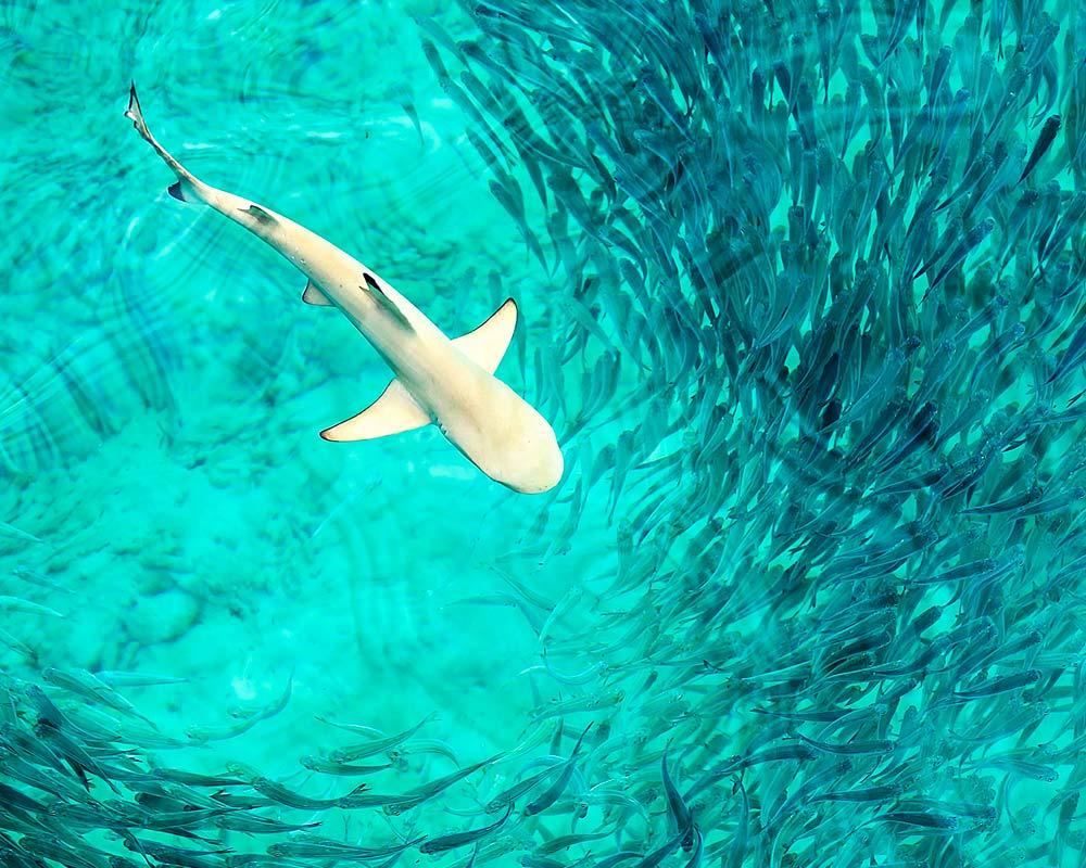 Far South Maldives