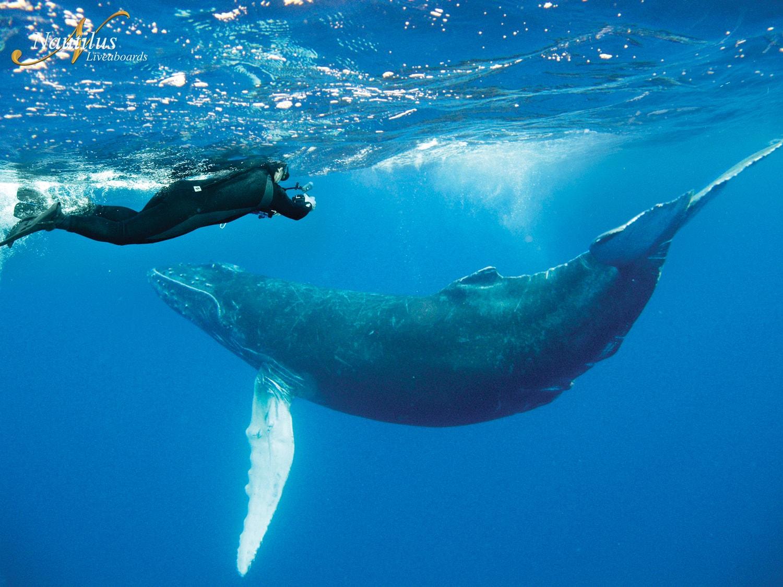 Humpback Whale Mexico