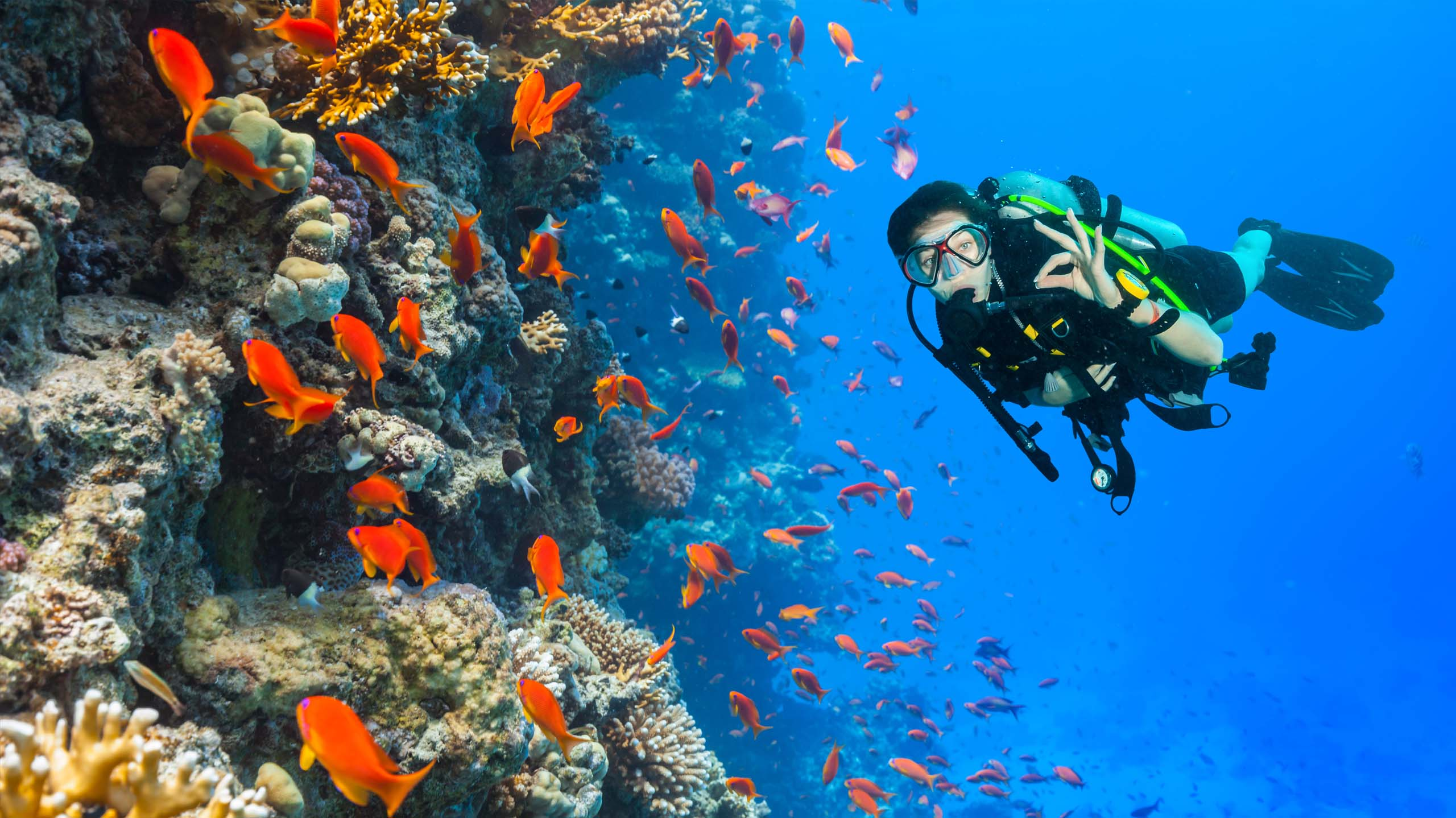 Scuba diver swims with shoal of orange fish above a reef