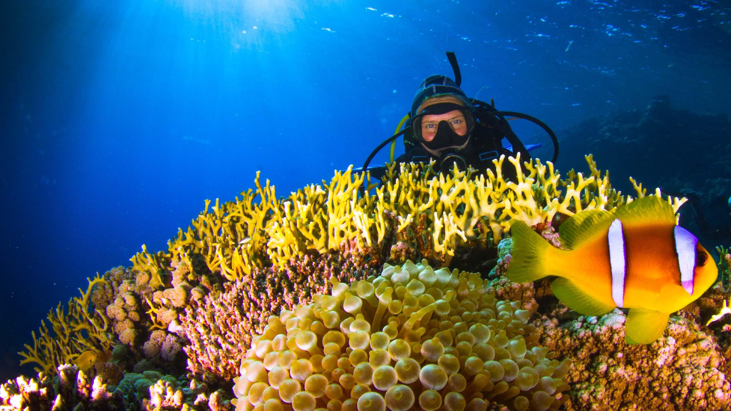 Scuba diver exploring Egyption coral reef